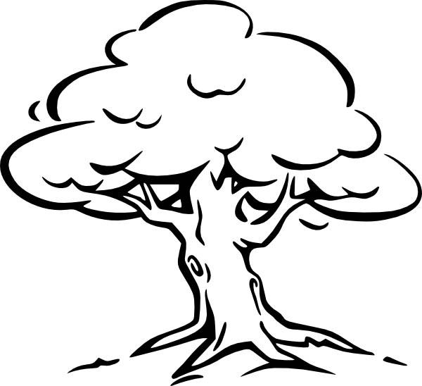 Oak Tree, : Oak Tree Coloring Page for Kids