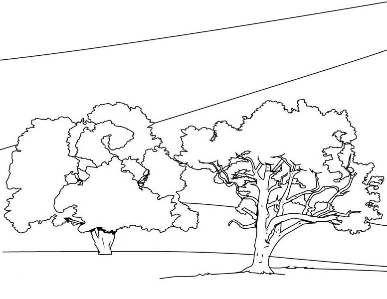Oak Tree, : Oak Tree Forest Coloring Page