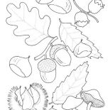 Oak Tree, Oak Tree Fruit Coloring Page: Oak Tree Fruit Coloring Page