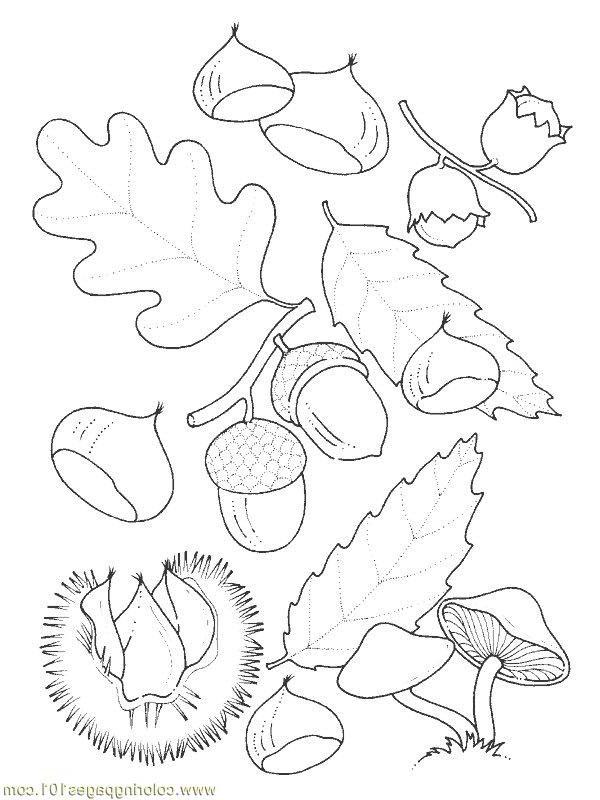 Oak Tree, : Oak Tree Fruit Coloring Page