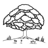 Oak Tree, Oak Tree Up At Hill Coloring Page: Oak Tree Up at Hill Coloring Page