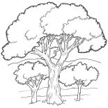 Oak Tree, Oak Tree In The Forest Coloring Page: Oak Tree in the Forest Coloring Page