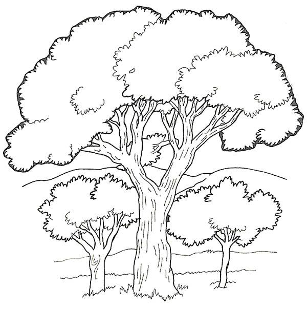 Oak Tree, : Oak Tree in the Forest Coloring Page