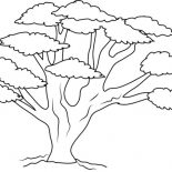 Oak Tree, Oak Tree With So Many Branch Coloring Page: Oak Tree with So Many Branch Coloring Page
