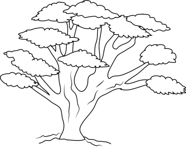 Oak Tree, : Oak Tree with So Many Branch Coloring Page