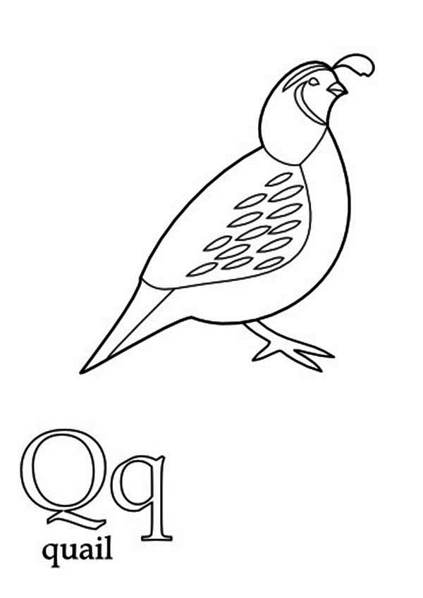 Quail, : Old World Quail Coloring Page