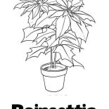 Poinsettia, P Is For Poinsettia Coloring Page: P is for Poinsettia Coloring Page