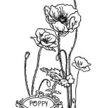 Poppy, P Is For Poppy Coloring Page: P is for Poppy Coloring Page