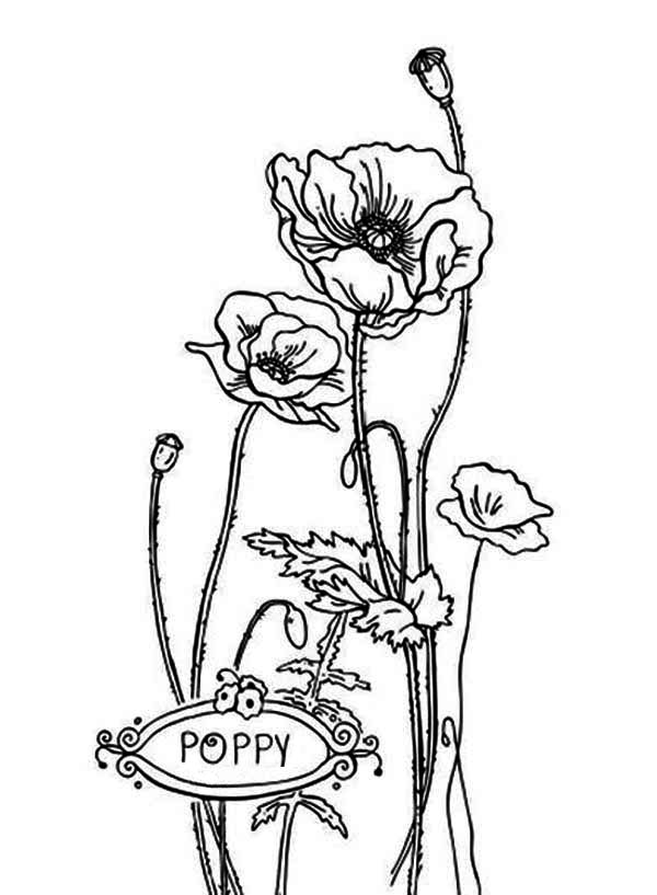 Poppy, : P is for Poppy Coloring Page