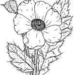 Poppy, Photo Of Poppy Coloring Page: Photo of Poppy Coloring Page