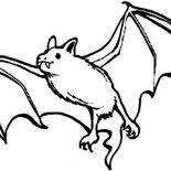 Bats, Picture Of Bats Coloring Page: Picture of Bats Coloring Page