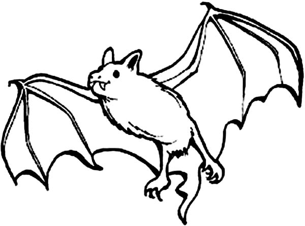 Bats, : Picture of Bats Coloring Page