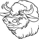 Bison, Picture Of Bison Head Coloring Page: Picture of Bison Head Coloring Page