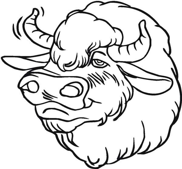 Bison, : Picture of Bison Head Coloring Page