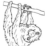 Sloth, Picture Of Sloth Coloring Page: Picture of Sloth Coloring Page