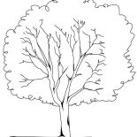 Oak Tree, Planting Oak Tree Coloring Page: Planting Oak Tree Coloring Page