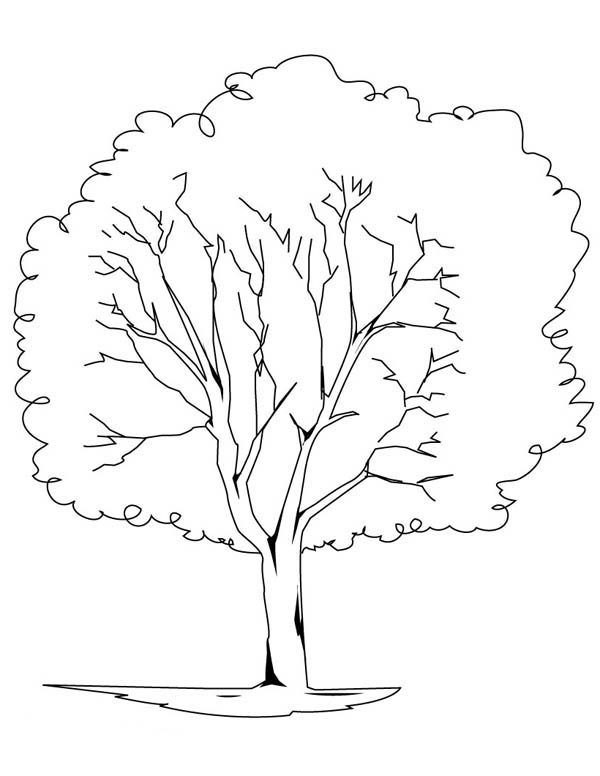 Oak Tree, : Planting Oak Tree Coloring Page
