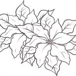 Poinsettia, Poinsettia Coloring Page: Poinsettia Coloring Page