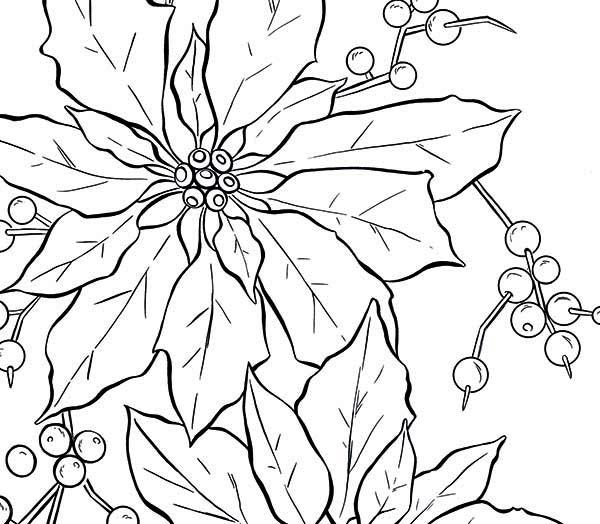 Poinsettia Fruit Coloring Page Color Luna