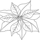 Poinsettia, Poinsettia Image Coloring Page: Poinsettia Image Coloring Page