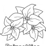 Poinsettia, Poinsettia Picture Coloring Page: Poinsettia Picture Coloring Page