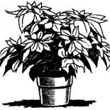 Poinsettia, Poinsettia For Decoration Coloring Page: Poinsettia for Decoration Coloring Page