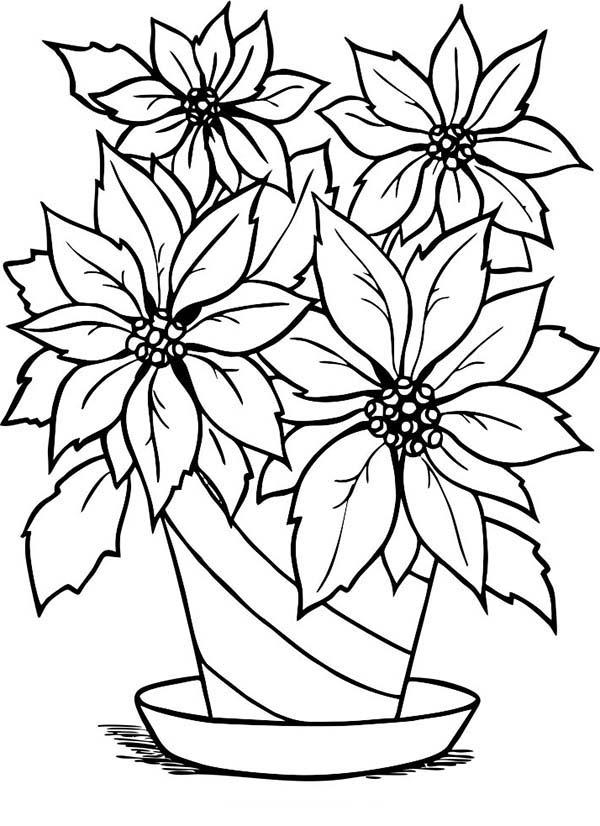 Poinsettia, : Poinsettia in Flowerpot Coloring Page