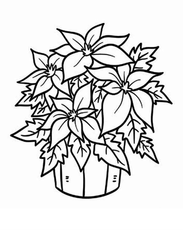 Poinsettia, : Poinsettia in a Bucket Coloring Page