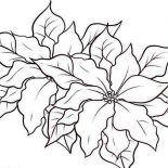 Poinsettia, Poinsettia In The Garden Coloring Page: Poinsettia in the Garden Coloring Page