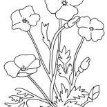 Poppy, Poppy Flower Coloring Page: Poppy Flower Coloring Page