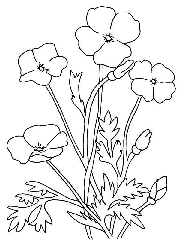 Poppy, : Poppy Flower Coloring Page