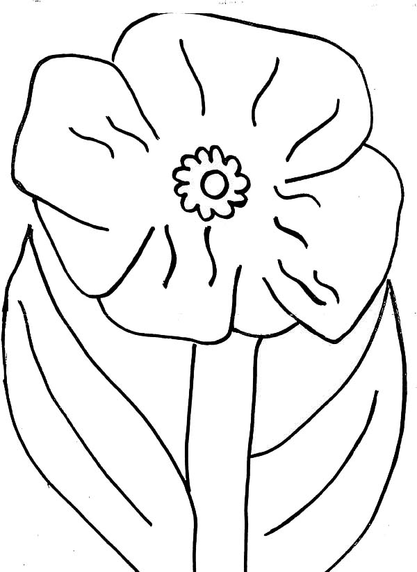 Poppy Flower Picture Coloring Page