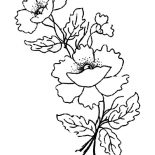 Poppy, Poppy Flower For Remembrance Day Coloring Page: Poppy Flower for Remembrance Day Coloring Page