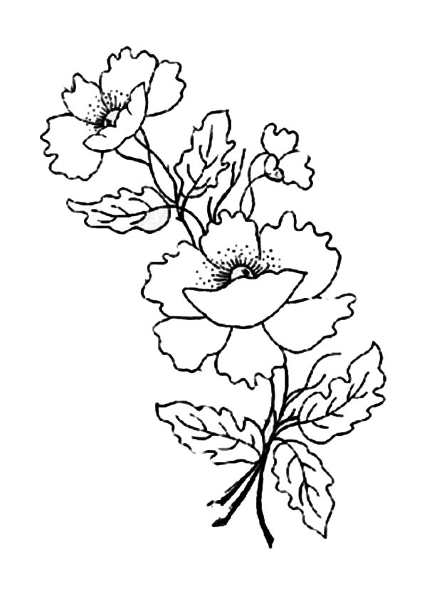 Poppy, : Poppy Flower for Remembrance Day Coloring Page