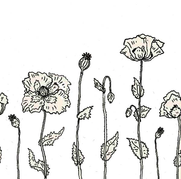 Poppy, : Poppy in Bloom Coloring Page
