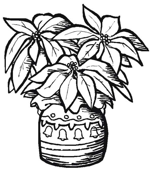 Poinsettia, : Pottery Poinsettia Coloring Page