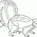 Skunk, Pregnant Skunk Coloring Page: Pregnant Skunk Coloring Page