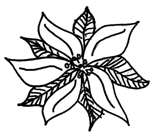 Poinsettia, : Pretty Poinsettia Picture Coloring Page