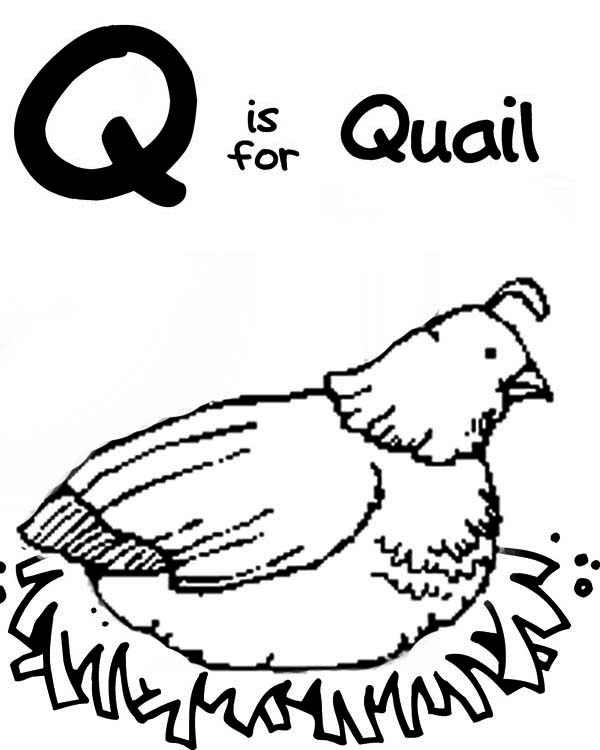 Quail, : Q is for Quail Coloring Page
