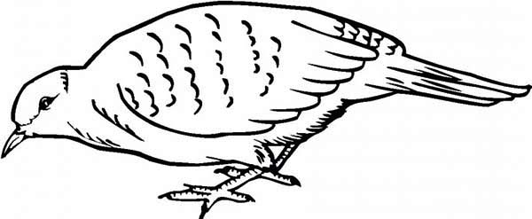 Quail, : Quail Find for Food Coloring Page