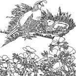 Quail, Quail Hiding Behind Bush Coloring Page: Quail Hiding Behind Bush Coloring Page