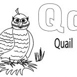 Quail, Quail Incubating Coloring Page: Quail Incubating Coloring Page