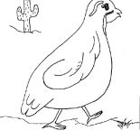 Quail, Quail Wander Around Coloring Page: Quail Wander Around Coloring Page