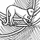 Lemur, Rainforest Lemur Coloring Page: Rainforest Lemur Coloring Page