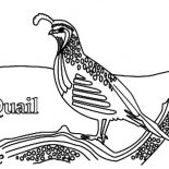 Quail, Realistic Drawing Of Quail Coloring Page: Realistic Drawing of Quail Coloring Page