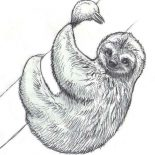 Sloth, Realistic Drawing Of Sloth Coloring Page: Realistic Drawing of Sloth Coloring Page