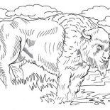 Bison, Realistic Picture Of Bison Coloring Page: Realistic Picture of Bison Coloring Page