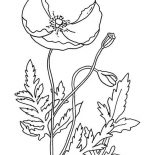 Poppy, Remembrance Day With Poppy Coloring Page: Remembrance Day with Poppy Coloring Page