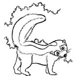 Skunk, S Is For Skunk Coloring Page: S is for Skunk Coloring Page