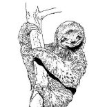 Sloth, S Is For Sloth Coloring Page: S is for Sloth Coloring Page